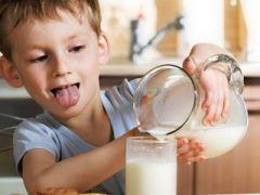 Молоко для аллергиков дают ГМО-коровы