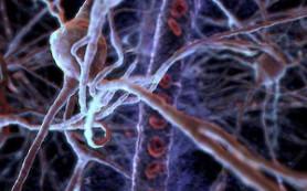 Ученые поняли, почему детские воспоминания не сохраняются в памяти