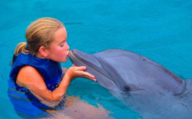 Дельфины могут определять пол будущего ребенка