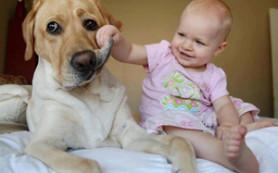 Атопический дерматит у ребенка: собака как мера профилактики