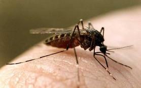 Стало известно, почему комары предпочитают беременных женщин
