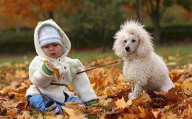 Дети и домашние животные: за и против