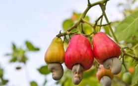 Эволюция предостерегает детей от растительных продуктов