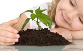 Выбираем комнатные растения для детской комнаты