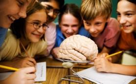 Формирование коры мозга происходит в три этапа