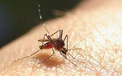 Как уберечь детей от насекомых