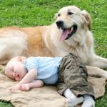Дети и домашние животные. Рождение ребенка