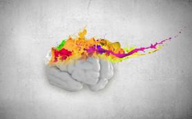 Мозг пятилетнего ребенка оказался пожирателем энергии
