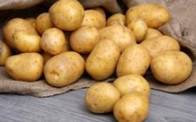 Эксперты: картофель – достойный источник калия и клетчатки для ребенка