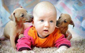 Наличие домашних животных снижает риск астмы у детей