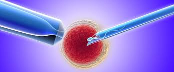 Особенности услуг Института Репродуктивной Медицины