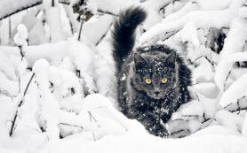 «Оранжевый» уровень опасности объявлен в Смоленской области из-за мороза