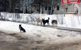 В райцентре Смоленской области собаки чуть не бросились на мать с ребенком