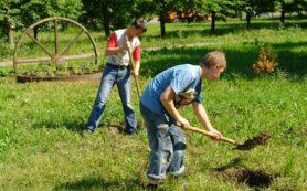 Сколько подростков Смоленска захотели подработать летом