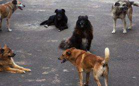 В Смоленске стая бездомных собак напала на ребенка
