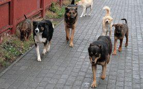 В Смоленске стая собак набросилась на ребенка и двух женщин