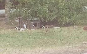 В райцентре Смоленской области на ребенка напали собаки