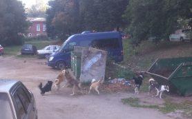 Агрессивные собаки выгнали детсадовцев с площадки Смоленской области