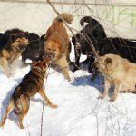 «Кидаются на детей возле школы». Жители райцентра Смоленской области жалуются на бродячих собак