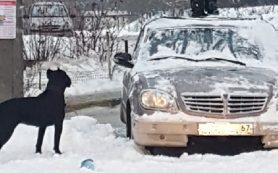 «Забралась на машину и стала прыгать». Смолян шокировало поведение девочки