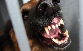 Под Смоленском бойцовский пес загрыз собаку на глазах у ребенка