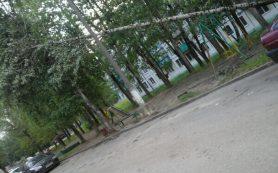 В Смоленской области дерево рухнуло на детскую площадку