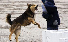 Смоляне просят соседей не выпускать собак на детские площадки