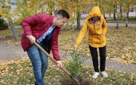 В Смоленской области на пришкольных участках высадили 705 деревьев