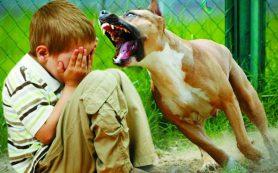 Следственный комитет заинтересовался нападением стаи собак на ребенка в парке