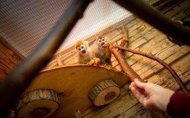 Смоленский зоопарк приглашает на предновогодние выходные